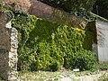 Mikulovský zámek, stěna v zahradě.JPG