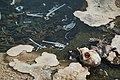 Monkey remains in Semuliki National Park - 1 Feb 2020.jpg