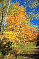 Montour Trail 5.jpg