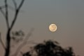 Moon at Dawn (26070276734).jpg