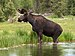 Moose - Photo (c) Walter Ezell, some rights reserved (CC BY)