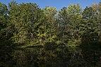 Morning at Ashton Pond 2.jpg