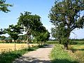Mortefontaine (60), chemin rural dit voirie des Rouliers.jpg