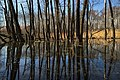 Moscow, Losiny Ostrov forest, pond on Upper Bogorodsky creek (31129050525).jpg