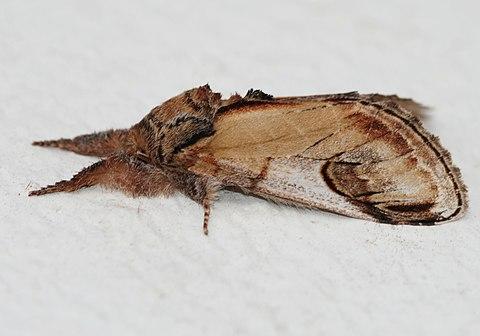 Moth August 2010-3.jpg