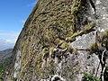 Mount Ribaue with Aloe (10200764286).jpg