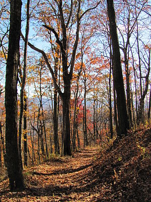 Mount Sterling (Great Smoky Mountains) - Mount Sterling, North Carolina Fall Foliage