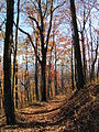Mount Sterling, North Carolina Fall Foliage 2.JPG