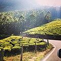 Munnar,Kerala2, India.jpg