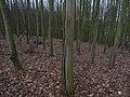 NPP U Nového mlýna - les v severovýchodní části chráněného území.jpg