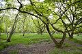 NSG Boberger Niederung 03-05-2014 Waldstück zwischen Haarteich und Kiessee 01.jpg