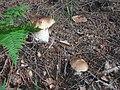 Na houbách - panoramio (1).jpg