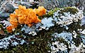 Naranja y blanco (46116111325).jpg
