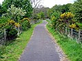 National Cycle Route 7 Near Blairs - geograph.org.uk - 431725.jpg