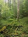 Nationalpark Hainich craulaer Kreuz 2020-06-03 22.jpg