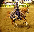 Native Arabian Costume Horse (2668748621).jpg