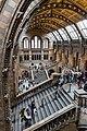Natural History Museum London (20568331344).jpg