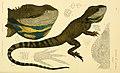 Natural history of Victoria (5998282339).jpg