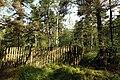 Nature reserve Rájecká rašeliniště in summer 2014 (11).JPG