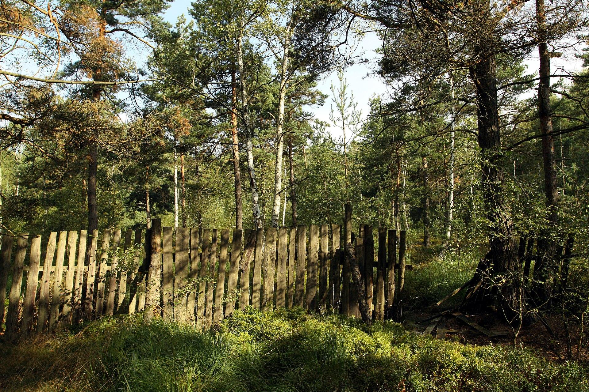 Rájecká rašeliniště – Wikipedie