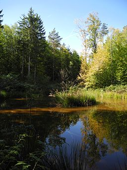 Naturpark Steigerwald, Teich mit Schilf