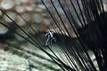 Nausicaa.jpg