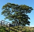 Near Malking Tower Farm - panoramio (1).jpg