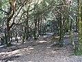 Nella foresta - panoramio.jpg