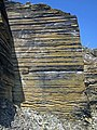 New Albany Shale (Upper Devonian; MacDonald Knob Outcrop, Bullitt County, Kentucky, USA) 7 (30962953557).jpg