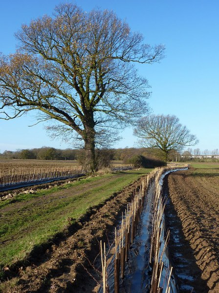 File:New hedgerow planting by track to Tiptree - geograph.org.uk - 1608665.jpg