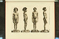 Nova Guinea - Vol 3 - Plate 37.jpg
