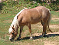 Nova the miniature horse.jpg