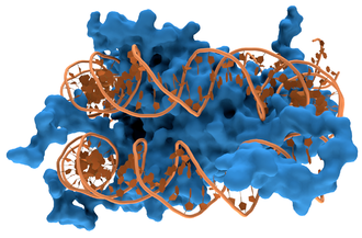 DNA-binding protein - Interaction of DNA (orange) with histones (blue). These proteins' basic amino acids bind to the acidic phosphate groups on DNA.