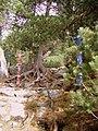 Old woods - panoramio.jpg