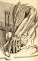 Ontleding des menschelyken lichaams.png