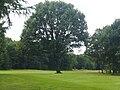 Oosterhoutse hole met boom.JPG
