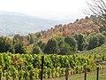 Oplenac, 2013-10-12 - panoramio (3).jpg
