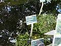 Orto botanico di Napoli 50.jpg