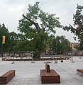 Ostatnia godzina baobabu 02.jpg