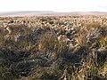 Otterburn Ranges - geograph.org.uk - 1088670.jpg