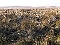 Otterburn Ranges - geograph.org.uk - 1088670.jpg
