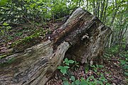 Přírodní rezervace Skalské rašeliniště (12).jpg