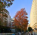 P1060116 Paris XII rue Villot rwk.JPG
