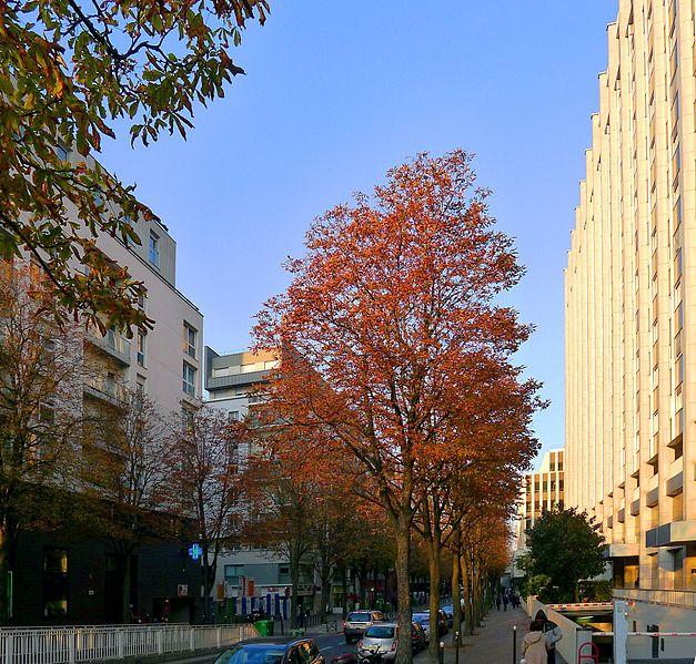 Fichier:P1060116 Paris XII rue Villot rwk.JPG