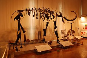Nevlje - The wooly mammoth skeleton is now the symbol of the Natural History Museum of Slovenia.