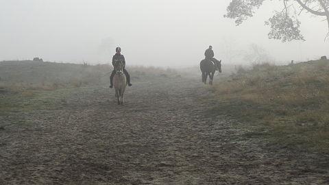 Paarden in De Loonse en Drunense Duinen.JPG