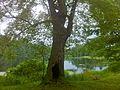Pachaug Trail - Porter Pond, Sterling, CT.jpg