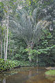 Paisaje de selva en Delta Amacuro.jpg