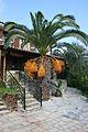 Palm tree with orange fruit.jpg