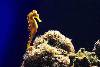 "Palma Aquarium - The ""Mediterranean Sea"" tank"